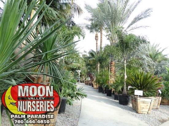 palm_paradise_pics_sept_2016_75.jpg