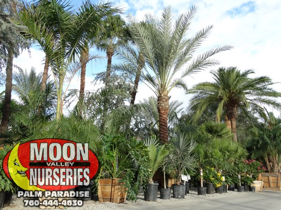 palm_paradise_pics_sept_2016_74.jpg