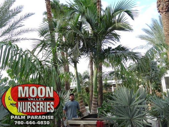 palm_paradise_pics_sept_2016_73.jpg