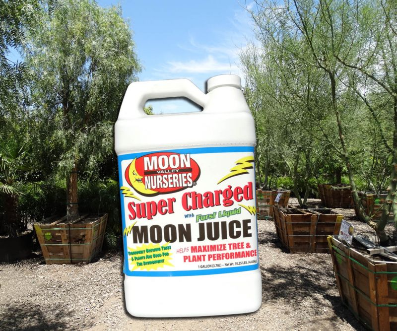 Supercharged Moon Juice